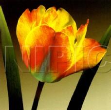 花卉油画  50厘米 X 50厘米
