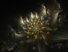 绚烂的色彩 华丽的效果 绽放的花朵图片