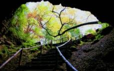 迎宾树 地下森林图片
