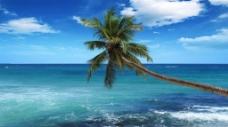 夏日蓝天白云海滩椰树海景图片