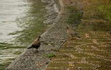 鸟一对图片