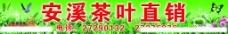 安溪铁观音茶叶图片