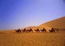 敦煌鸣沙山 《 驼队》图片
