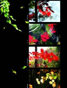 草木摄影图片