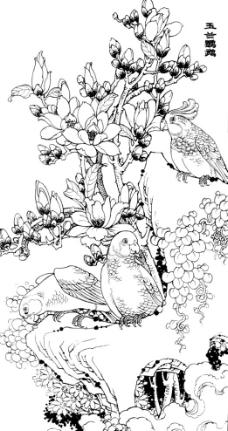 玉兰鹦鹉图片