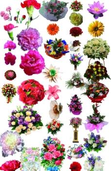 高清鲜花集合图片