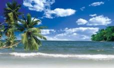 夏日蓝天海滩椰树图片