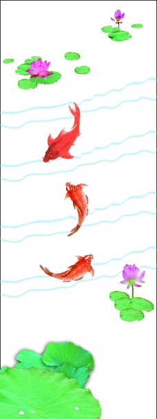 荷花鲤鱼图片