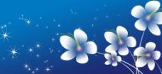 盛开花朵图片