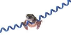 可爱青蛙图片