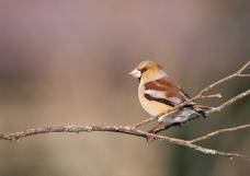四季鸟鸣0693