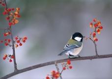 四季鸟鸣0696