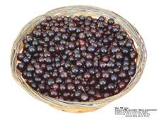 莓果0365