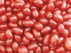 莓果0279