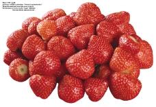莓果0293