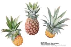 水果0117