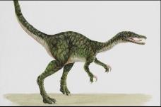 恐龙插画0120