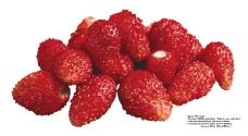 莓果0264