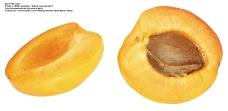 水果0112