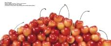 莓果0389