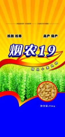 小麦种子图片