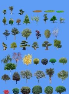 植物素材图片