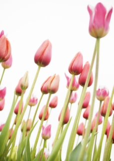 高清图库素材 阳光鲜花