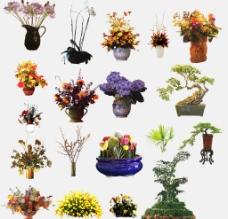 室内植物盆栽图片