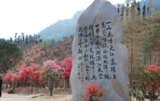 映山红林图片