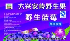 野生蓝莓图片
