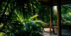 廣州華南植物園一角圖片