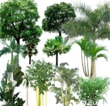 树木PSD素材图片