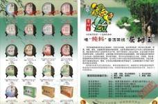 普洱茶树王图片