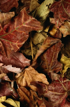 秋天 落叶落归根 季节 季节背景