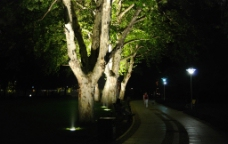 夜色中的浙江杭州西湖柳浪闻莺的大树图片