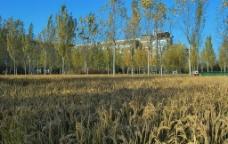 美丽的校园图片