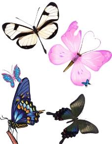 蝴蝶大全圖片
