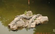 野生动物园图片