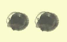經典的圓形水墨筆刷